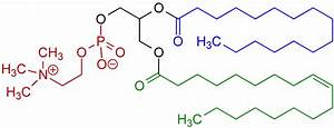 File:1-Palmitoyl-3-oleoyl-phosphatidylcholine Structural ...  Phosphatidylcholine