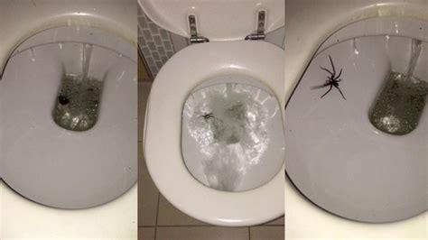 signification araignee dans une maison en australie m 234 me 233 craser une araign 233 e c est dangereux