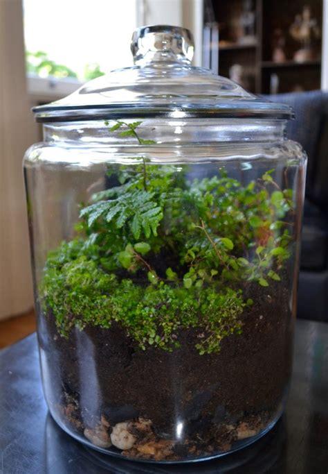 closed terrariums indoor gardens  glass global
