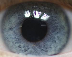 File:Electric Blue Eye.jpg - Wikimedia Commons