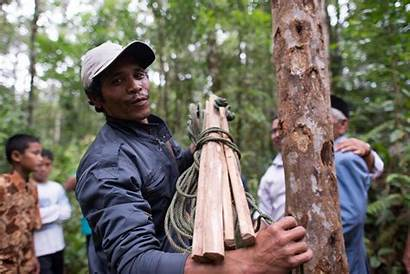 Indigenous Land Indonesia Community Communities Deploy Mapmaking