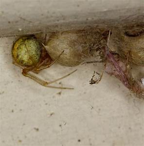 Se Débarrasser Des Araignées : pyrel comment se d barrasser des araign es ~ Louise-bijoux.com Idées de Décoration