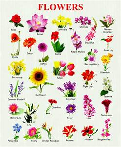 Awesome Stock Of Flowers With Name Chart New Collection