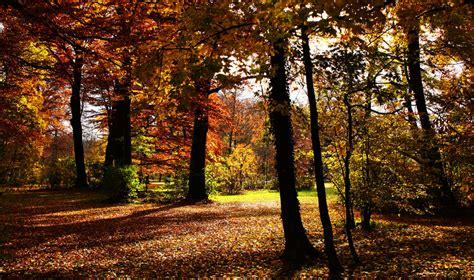Herbst Im Englischen Garten by Englischer Garten Foto Bild Jahreszeiten Herbst