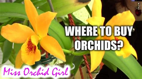 Where To Buy by Where To Buy Orchids Tips On Buying Great Orchids