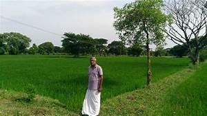 Ravi in his rice - Global Farmer Network™