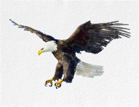 28 best watercolor birds of prey eagle images on