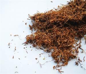 Tabak Selber Anbauen : shisha tabak selber machen shisha tipps blog elwano shisha shop online shisha tabak und ~ Frokenaadalensverden.com Haus und Dekorationen