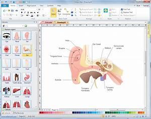 Human Anatomy Diagram Software