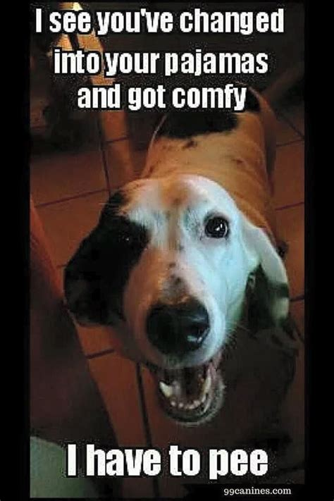 funny dog   pee meme funny quotes funny dogs