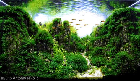 Aquascaping Contest by 2016 Aga Aquascaping Contest 6