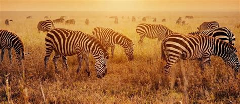 African Safari Tours: Private Vacations with Enchanting ...