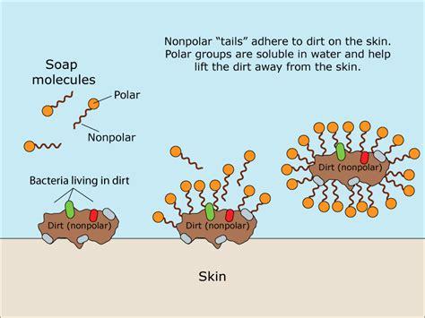 How Soap Kills COVID-19 on Hands