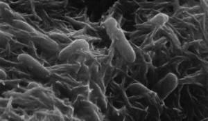 Electric Bacteria
