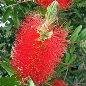 Plante Fleur Rouge Exterieur La Pilounette