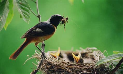 2 friandises maison pour les oiseaux trucs pratiques