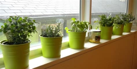 Window Sill Garden Vegetables by Indoor Herb Garden How To Create A Spectacular And Useful