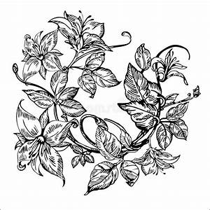 Vintage Elegant Flowers. Black And White Vector ...