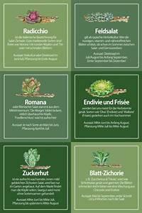 Feldsalat Setzlinge Pflanzen : sommersalate selbst anbauen mein sch ner garten ~ Frokenaadalensverden.com Haus und Dekorationen
