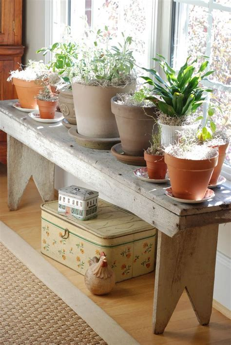 17 Best Images About House Plants On Pinterest Plants