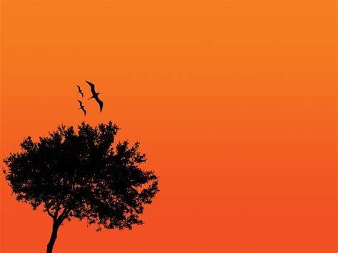 Aesthetic Orange Minimalist Wallpaper by Orange You Thinking It S Beautiful To Empower And