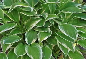 Tropische Pflanzen Kaufen : balkonpflanzen so viele m glichkeiten bietet der kleine raum ~ Watch28wear.com Haus und Dekorationen