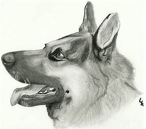 German Shepherd Stock 87 Drawing By Redsoulwolf13 On