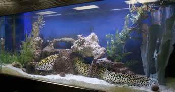 aquarium designer fish aquarium design design and ideas