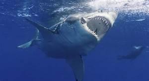 Counting Sharks On Australia U0026 39 S East Coast