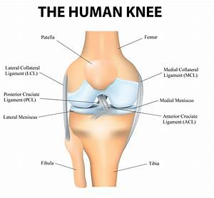 Parts Of The Knee
