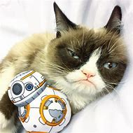 Star Wars Grumpy Cat Meme