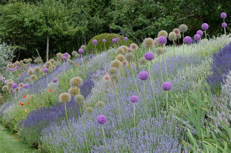 Lavendel Und Gräser by Ein Traumpaar F 252 R Trockene Standorte Zierlauch