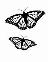Butterfly Coloring Pages Butterflies Pair sketch template
