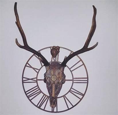 Deer Still Fallow Skull Skeleton Young Stood