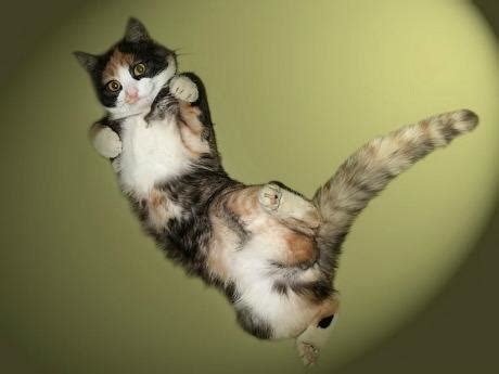 cats caught hovering  mid air pleated jeans