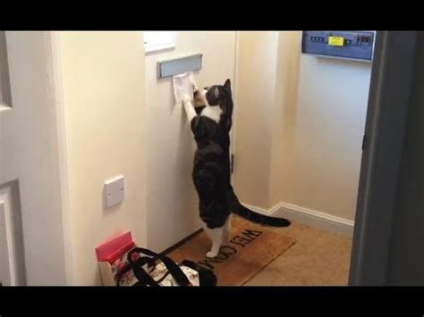 cats  mail compilation youtube