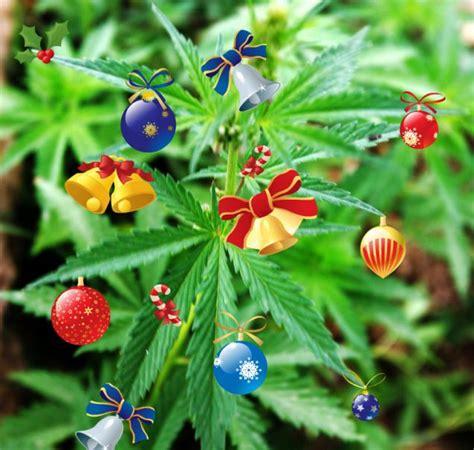 prisoner put christmas decorations on cannabis plant