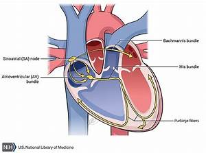 Sick Sinus Syndrome - Genetics Home Reference