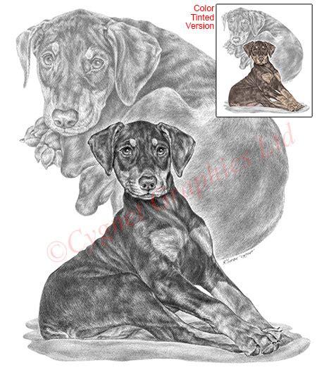 dog drawings  breed art prints canine artwork