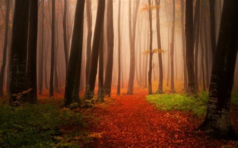 misty autumn forest wallpapers hd wallpapers id