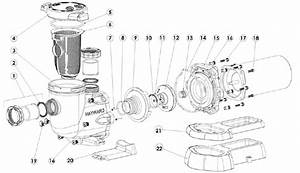 31 Pool Pump Parts Diagram
