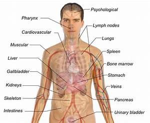 The Organs Of The Body