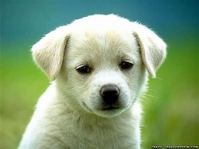 Dog Dogs Puppies Bitch Wild