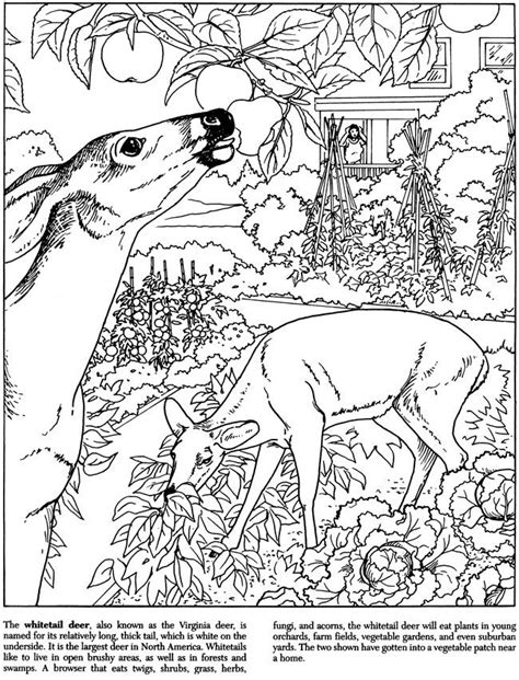 271 best Art: Coloring Pages images on Pinterest