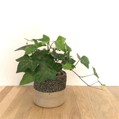 Window Potted Plants by Small Potted Plant In Basket In Charlottesville Va