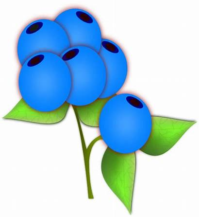 Blueberries Blueberry Clipart Transparent Clip Vector Clker