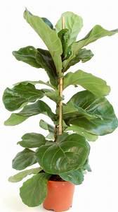 Plantes à Suspendre : grande plante verte d interieur ~ Premium-room.com Idées de Décoration
