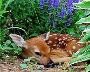Baby Fawn Hidden In The Grass Wallpaper Hd : Wallpapers13 com