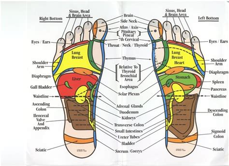 green holisticlifestyle    learn   foot