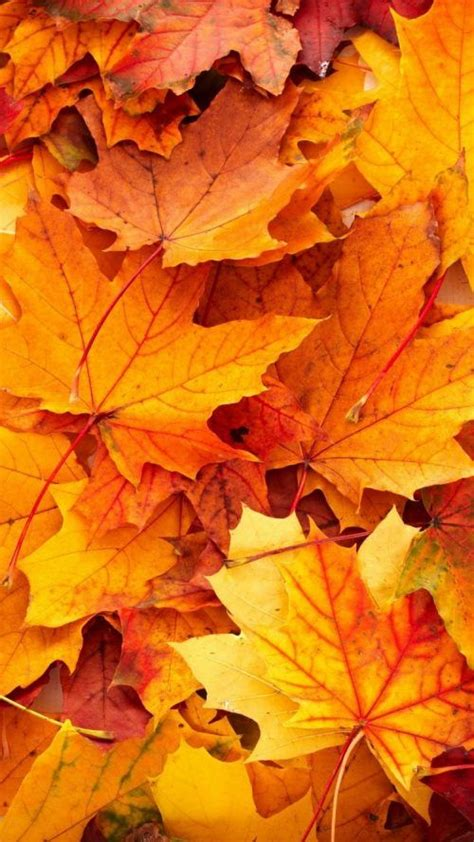 Beautiful Fall Leaves Iphone Wallpaper by Best Wallpapers For Iphone 6 And Iphone 6s With High